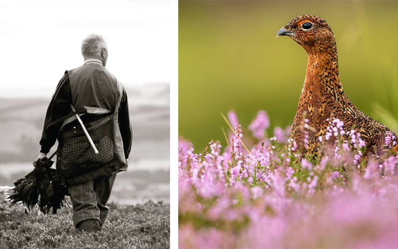glorious twelfth grouse 1 - The Artisan Food Trail