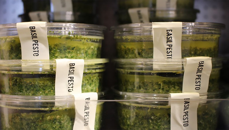 Basil Pesto – The Hungry Guest 4 - The Artisan Food Trail