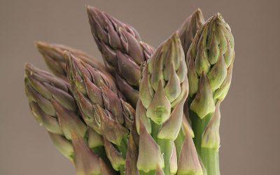 British asparagus season is here!