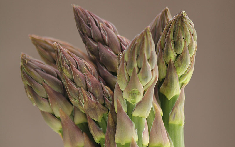 British asparagus season is here!