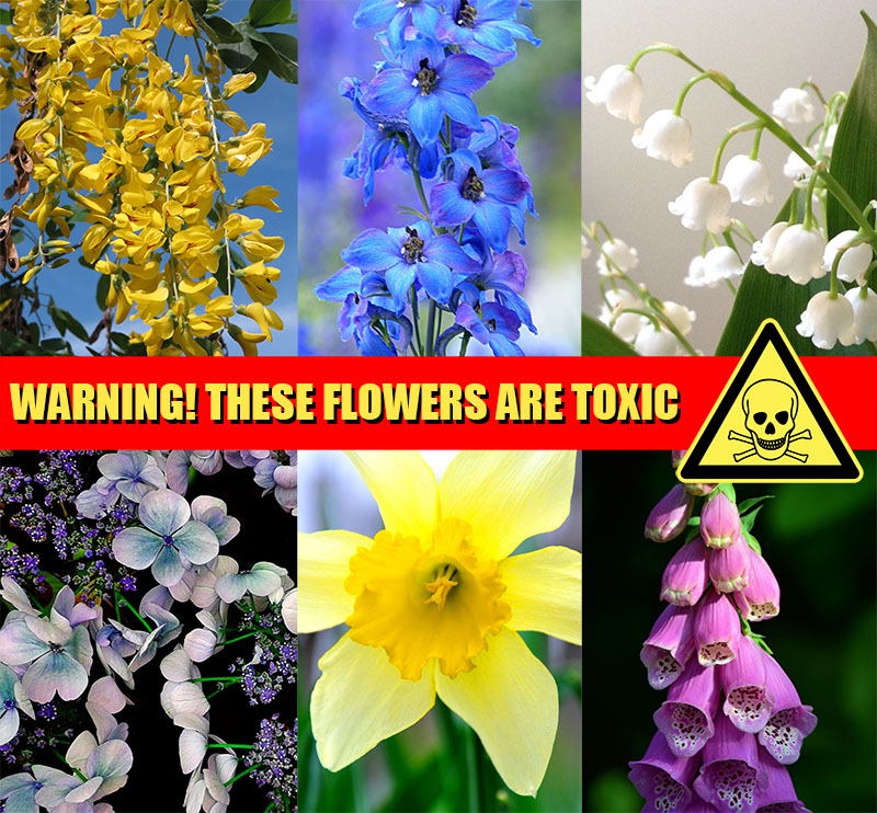 Non Edible Flowers Danger Do Not Eat – The Artisan Food Trail
