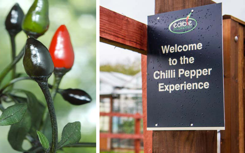 Chilli Experiences are back at Edible Ornamentals