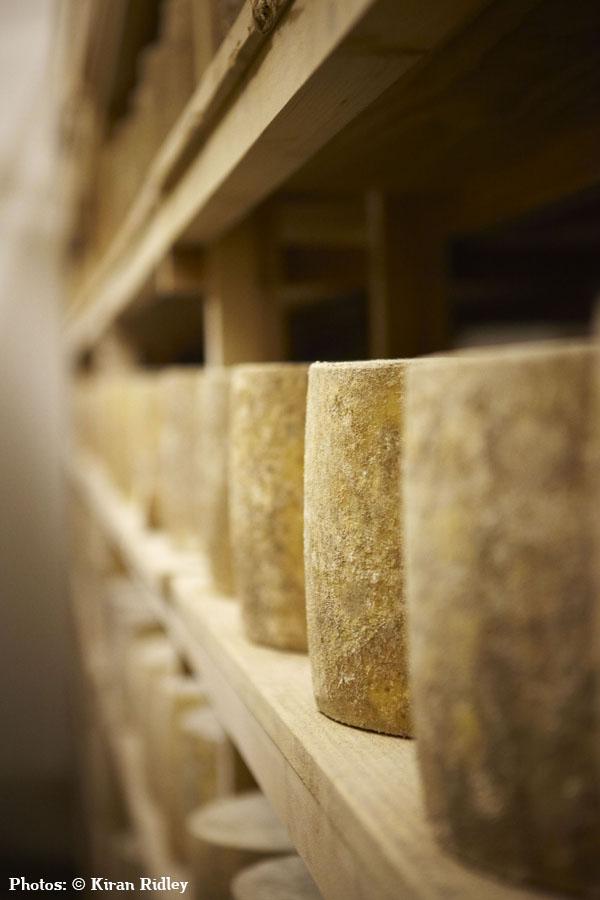 Hafod Welsh Organic Cheddar 2 - Artisan Food Trail