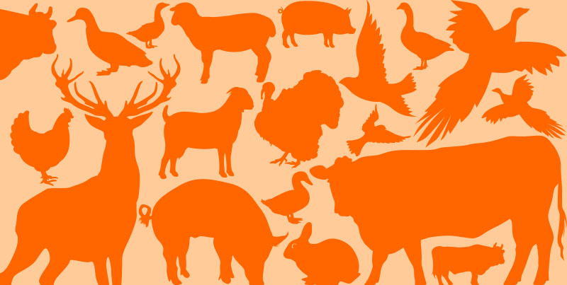 Foods in Season – Meat and Game Autumn