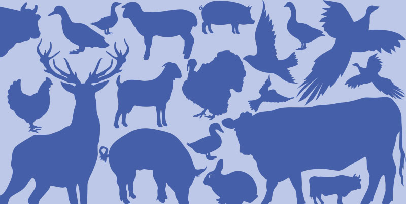 Foods in Season – Meat and Game Winter