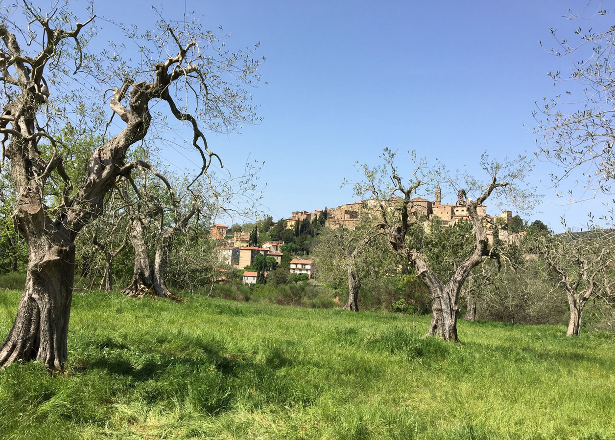 SEGGIANO & LUNAIO from Peregrine Trading 2 - the artisan food trail